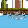 Tiburón de Miami