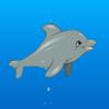 Mi Dolphin Show 2