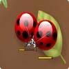 Araña Bugs