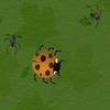 Spider Hazard